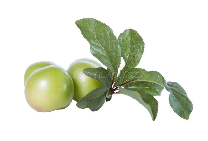 未成熟的绿色李子和叶子 免版税库存照片