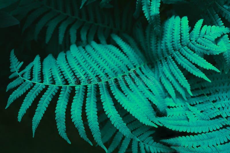 未来派蕨叶子 您的设计的明亮的水色背景 库存照片