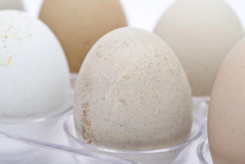 未洗的新鲜的有机gmo和大豆自由牧场地培养了鸡蛋温暖的舒适冬天手套 库存照片