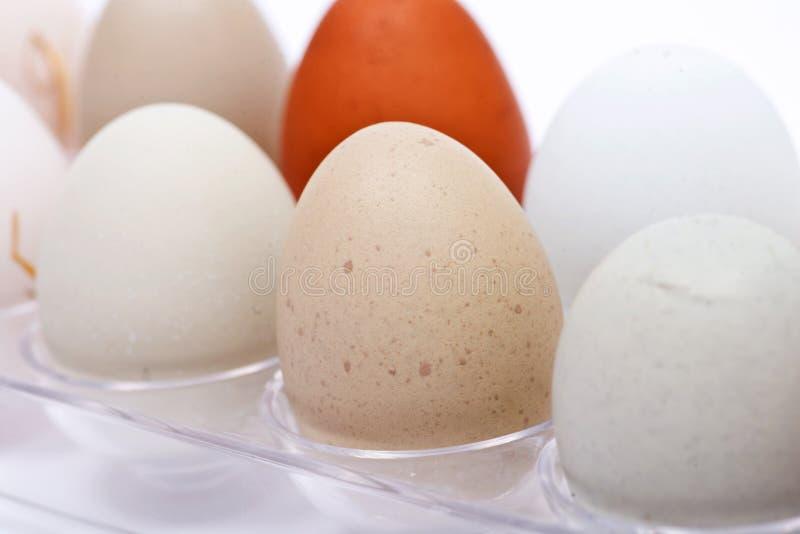 未洗的新鲜的有机gmo和大豆自由牧场地培养了鸡蛋温暖的舒适冬天手套 免版税图库摄影