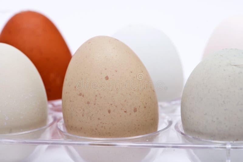 未洗的新鲜的有机gmo和大豆自由牧场地培养了鸡蛋温暖的舒适冬天手套 图库摄影