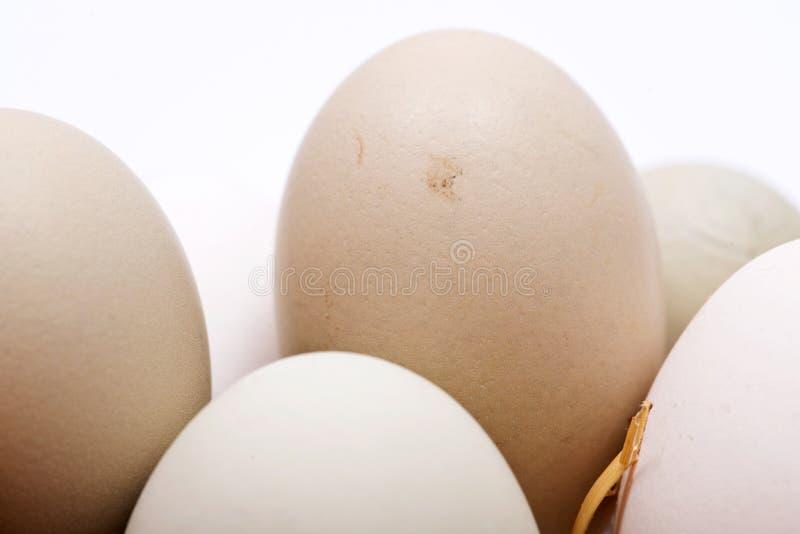 未洗的新鲜的有机gmo和大豆自由牧场地培养了鸡蛋温暖的舒适冬天手套 免版税库存图片
