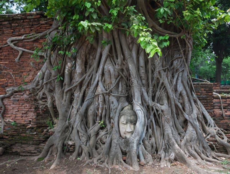 未看见的泰国,砂岩菩萨头在树根的在Wat Mahathat 图库摄影