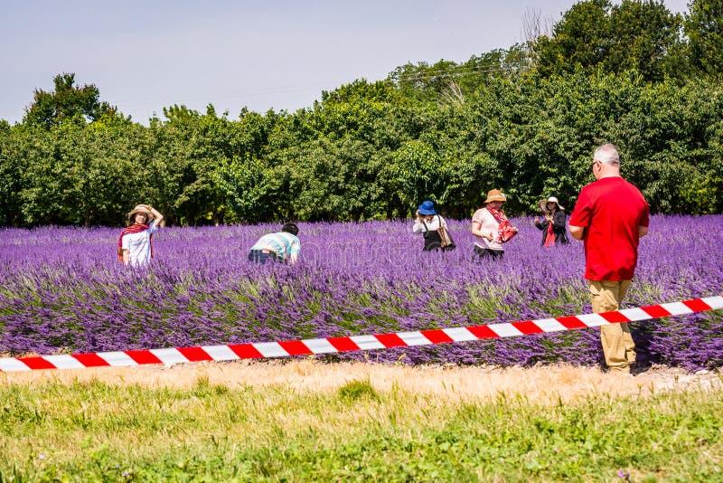 未知的地方,法国- 2018年6月17日 淡紫色领域的亚裔游人 免版税库存照片