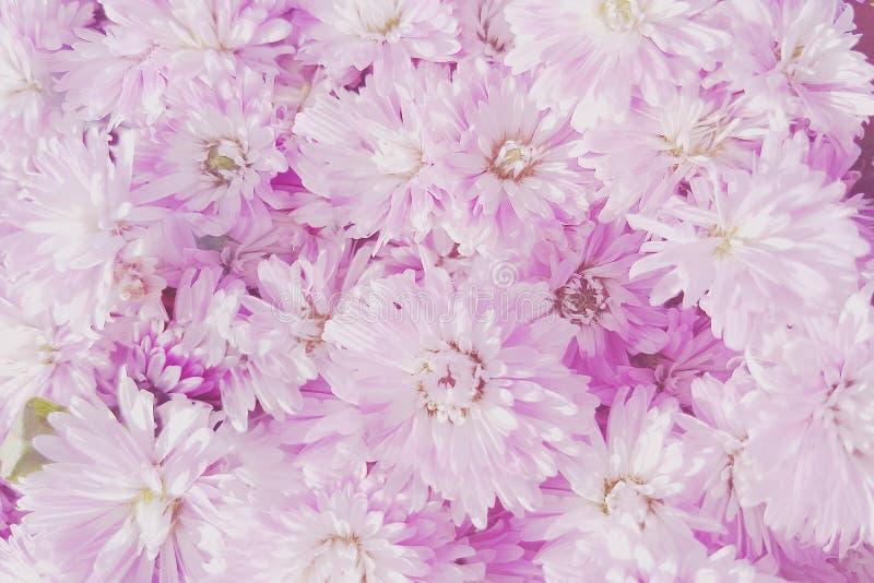 未聚焦的迷离花瓣,夏天开花的精美花在开花的花欢乐背景,淡色和软的花束 免版税库存照片
