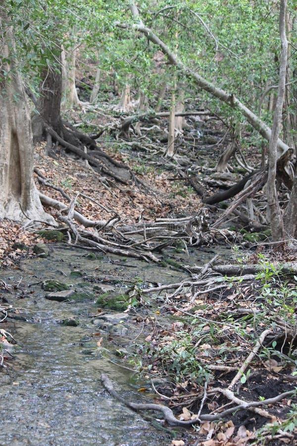 未触动过的森林风景'Bandhavgrah国立公园'印度 库存图片
