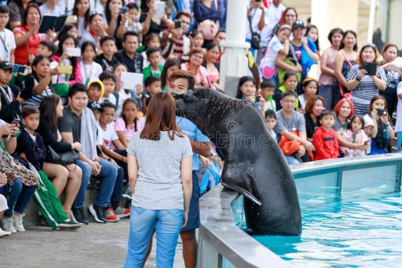未认出的人民遇见在人群前面的海狮在S 免版税库存图片