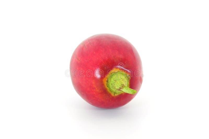 末端番茄 免版税库存照片