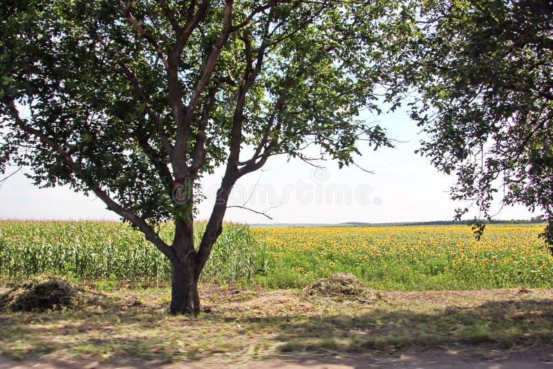 本质、领域、乌克兰的村庄和路风景视图  从车窗的看法,当驾驶时 库存图片