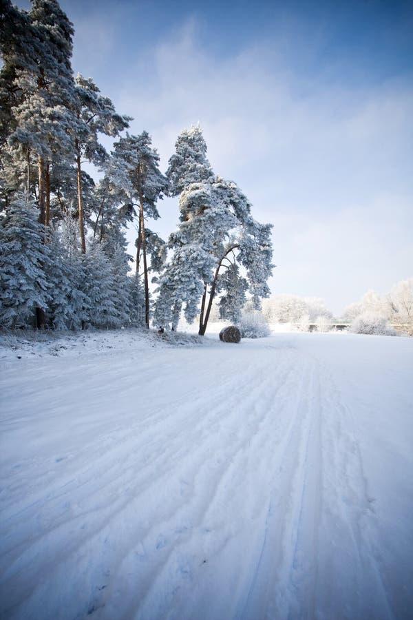 本质场面冬天 库存图片