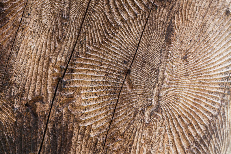 本质木头剪切 库存照片