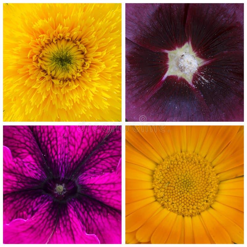 4朵花的片段的拼贴画,宏指令,特写镜头 免版税库存照片