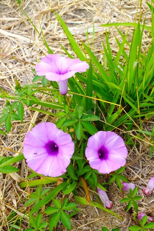 3朵花绽放 免版税库存图片