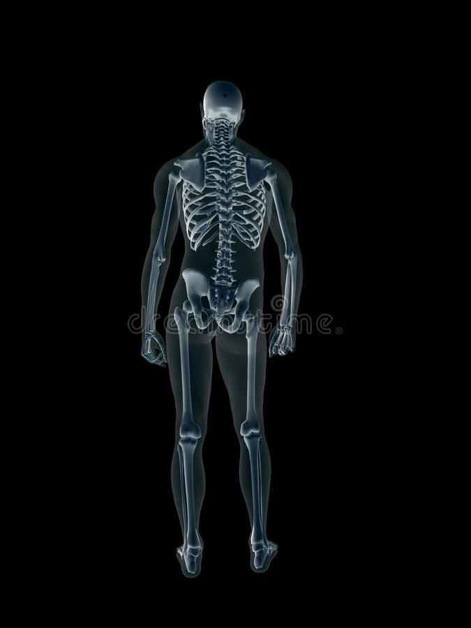 机体人力男性光芒x X-射线 皇族释放例证