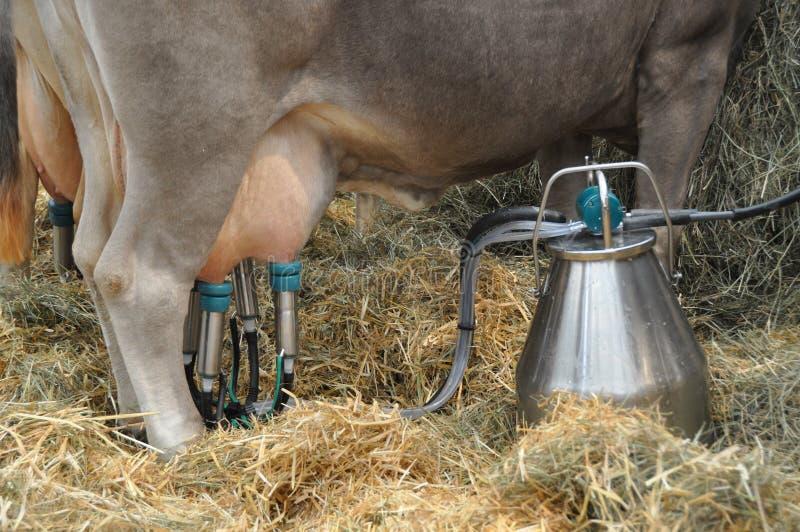 机器挤奶 免版税库存图片