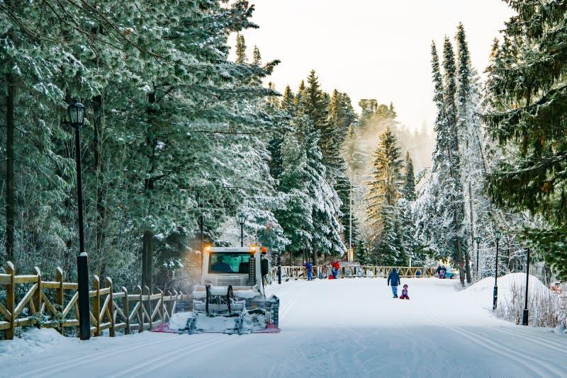 机器snowcat在具球果森林里变紧密在滑雪倾斜的雪, 免版税库存图片