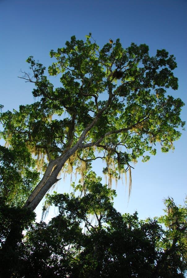机盖雨林 库存图片