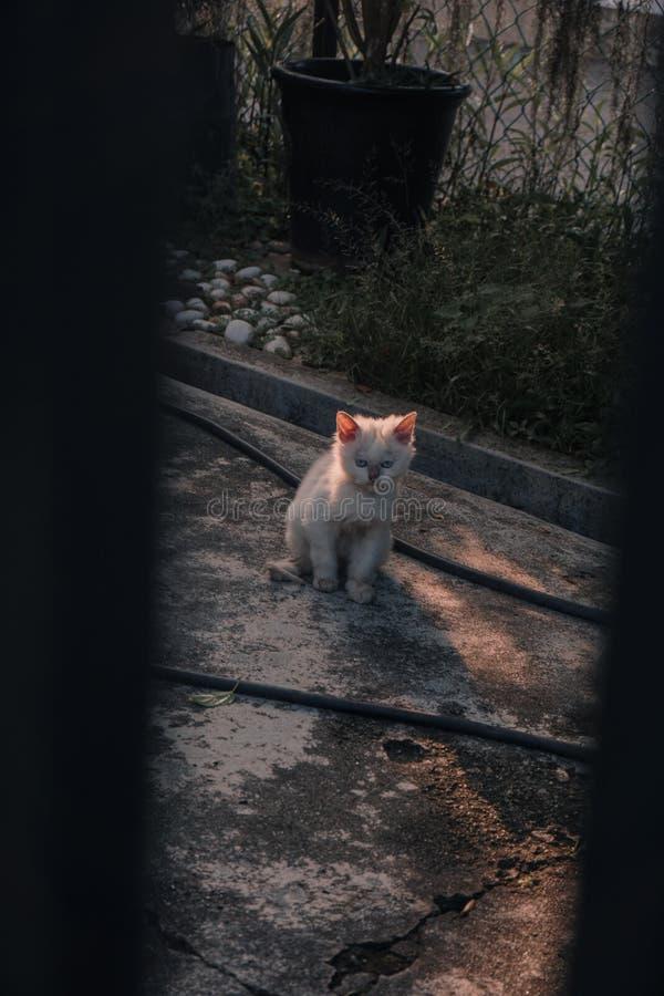 杂乱困猫 库存照片