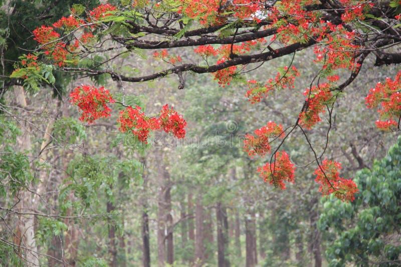 杂凑的红色花树 免版税库存照片