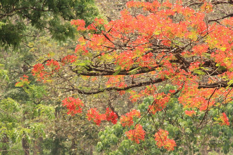 杂凑的红色花树 库存图片
