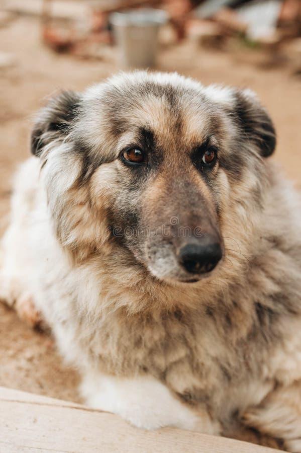 杂种在地面上的狗坐的layind 免版税图库摄影