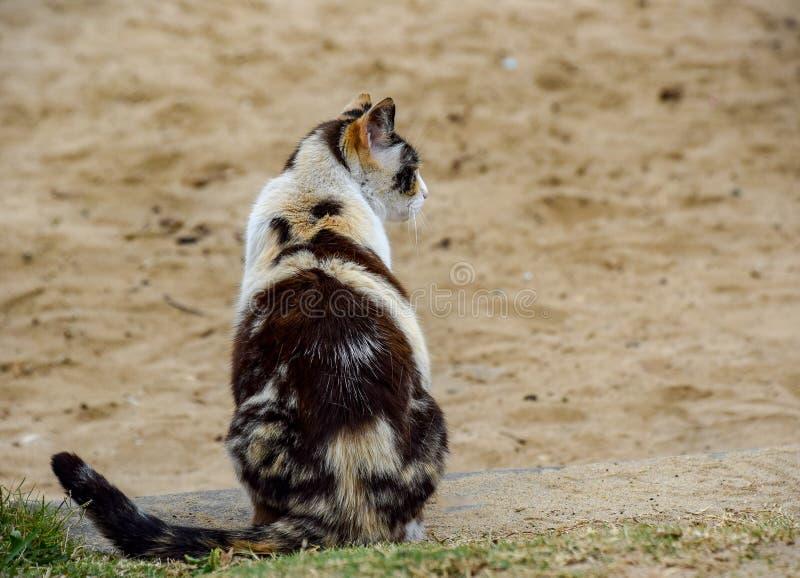 杂色猫外形 库存图片