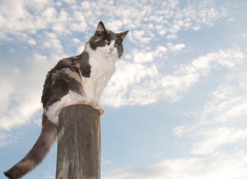 杂色猫被稀释的范围开会 图库摄影