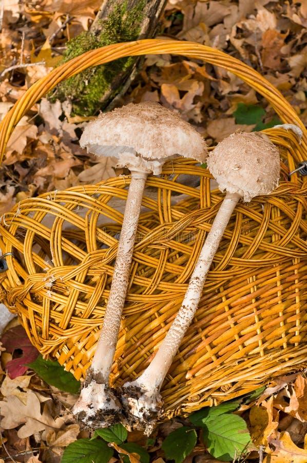 杂色的蘑菇伞 免版税库存照片