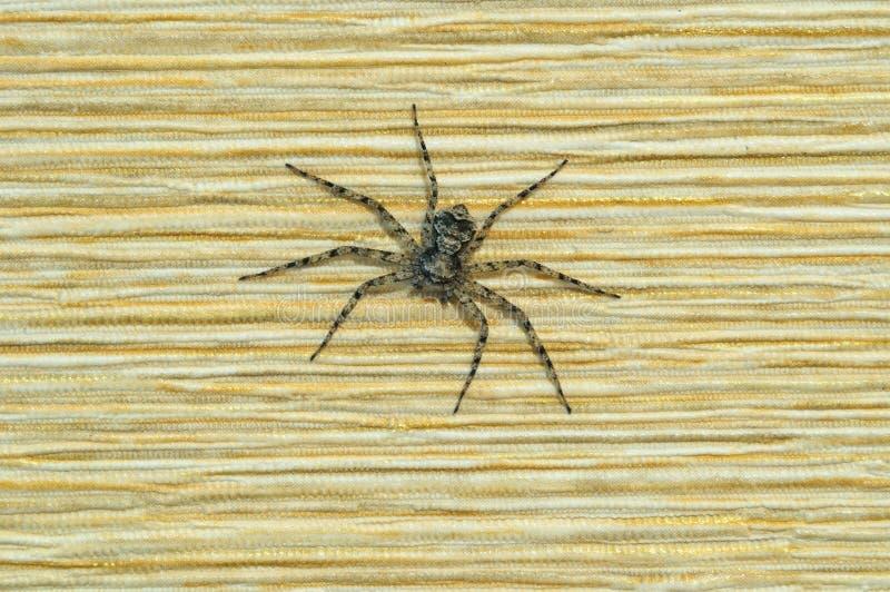 杂色的颜色一只小蜘蛛在墙壁上的 库存图片