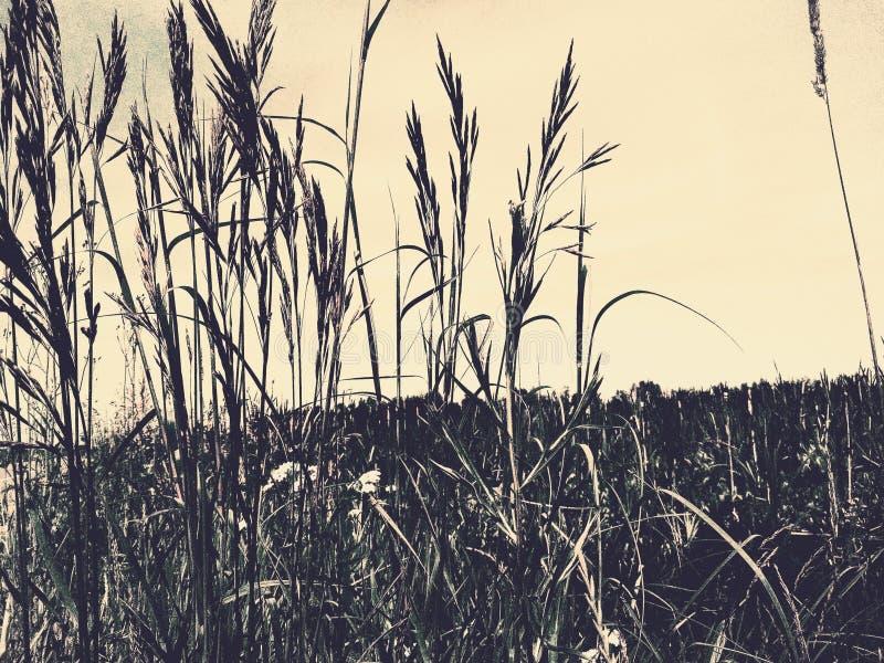 杂草动物观看长的草未开发的地区大草原沼泽 图库摄影