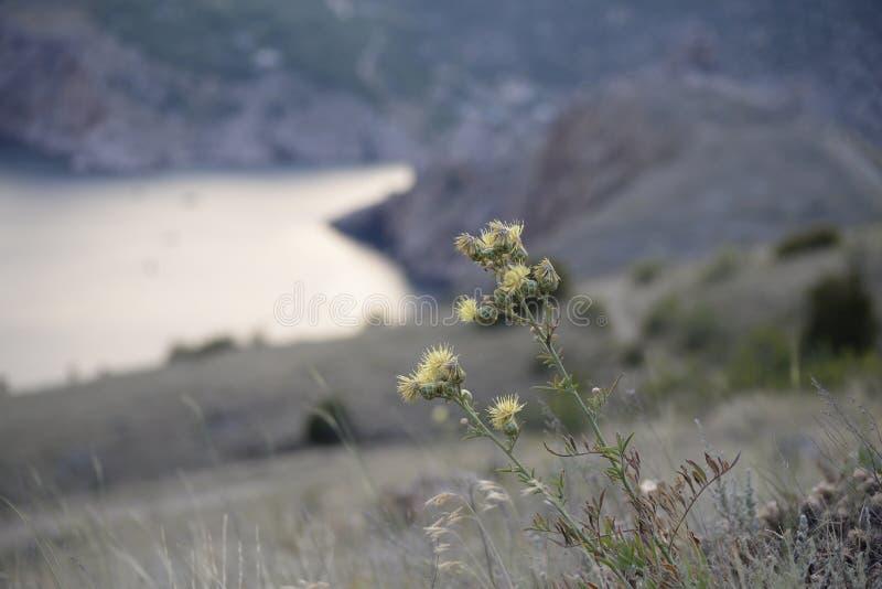 杂草增长 图库摄影
