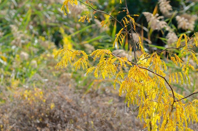 杂草的秋天图象在路旁的 图库摄影