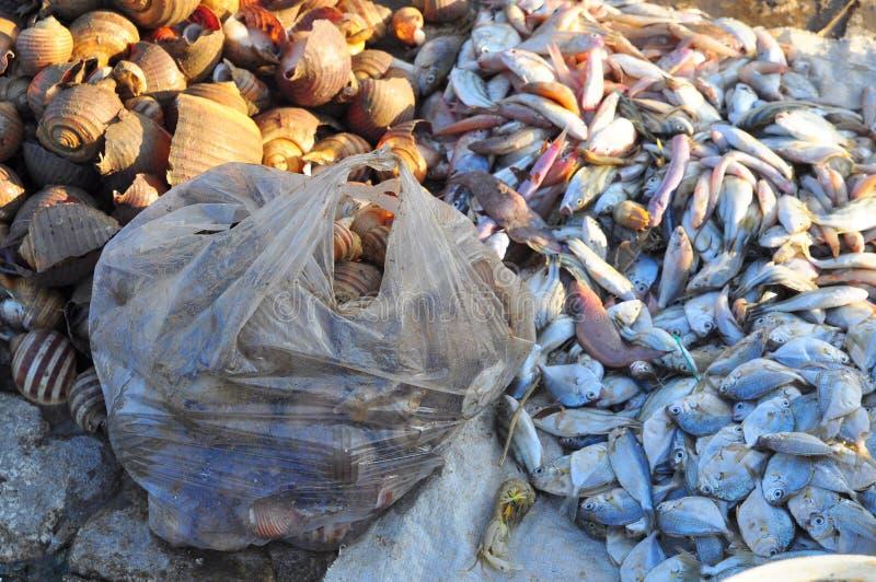 杂鱼在越南收集生产鱼粉和鱼油 免版税库存图片