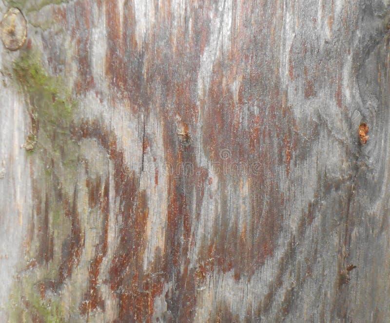 杉木关闭的树干 库存图片