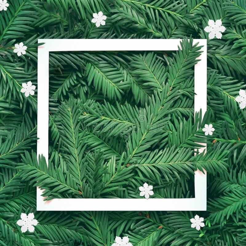 杉木分支创造性的背景与白皮书框架的 新年和圣诞快乐概念 免版税库存照片