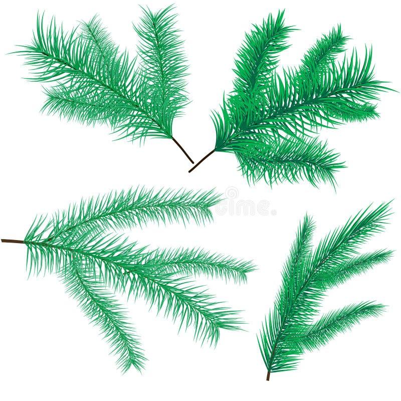 杉木和云杉的分支 向量例证