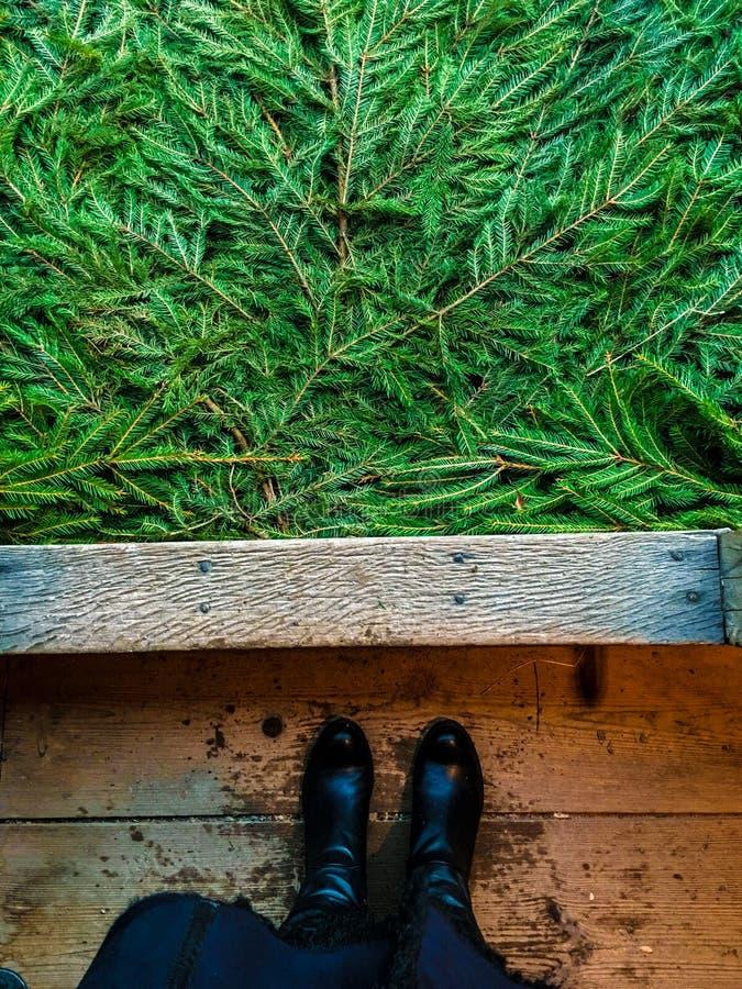 杉木和木头 免版税库存照片