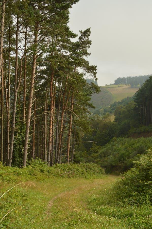 杉木和玉树围拢的土路在一座山的上流在卢戈在加利西亚 自然,动物,风景,旅行 免版税库存图片