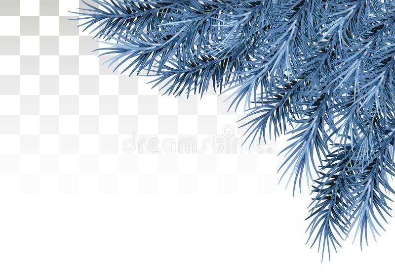 杉木和霜分支在雪的在透明背景的 库存例证