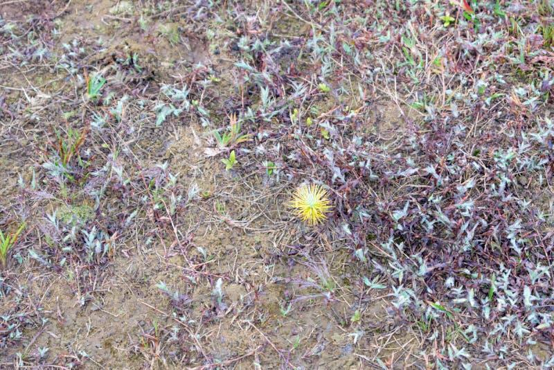 杉木成长、成长和蘑菇幼木在有露水的森林里在日出第5部分的草 库存照片