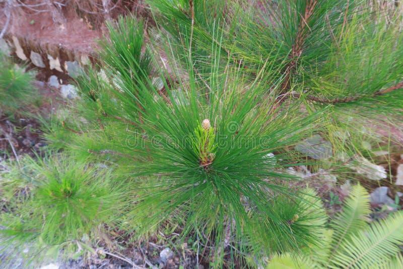 杉木成长、成长和蘑菇幼木在有露水的森林里在日出第4部分的草 免版税库存图片