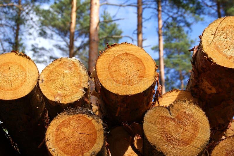 杉木木材 免版税库存照片