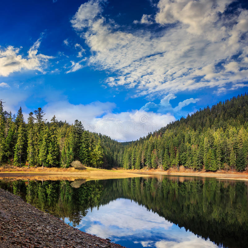 杉木森林和湖在清早山附近 免版税库存图片