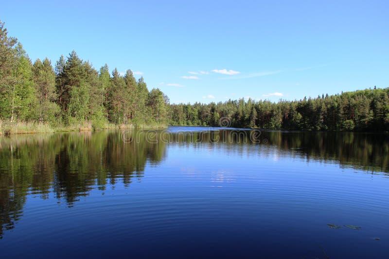 杉木森林和湖 免版税库存图片
