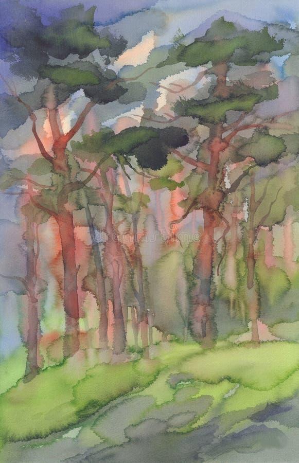 杉木森林水彩背景 皇族释放例证