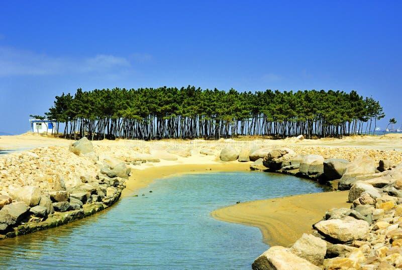 杉木海滨结构树