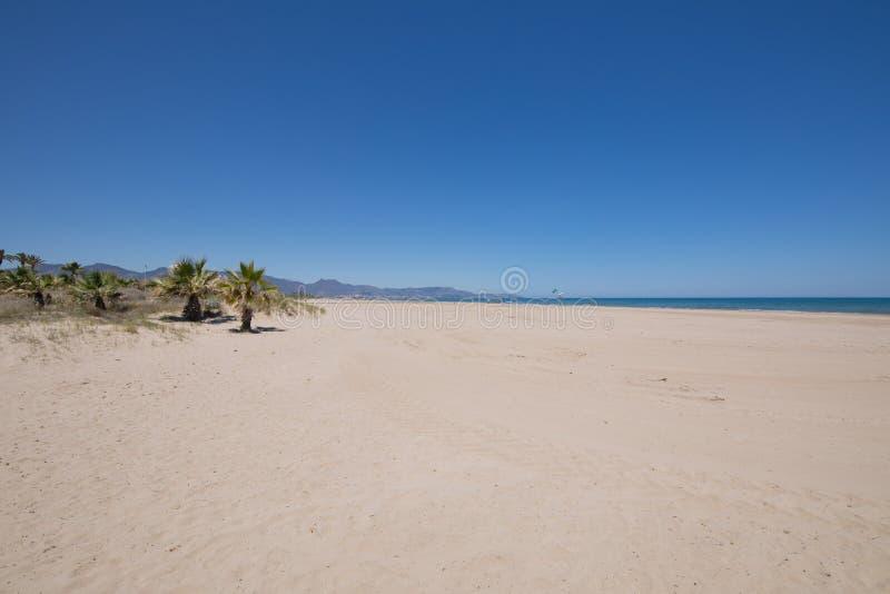 杉木海滩在Castellon Grao  图库摄影