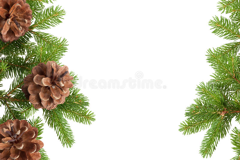 杉木锥体和针 库存照片