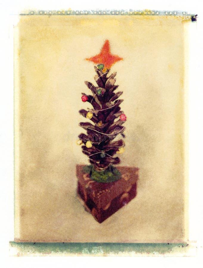 杉木锥体圣诞树 免版税库存照片