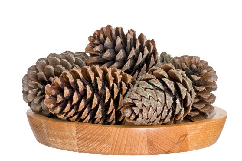 杉木锥体,冬天欢乐或季节性装饰 库存图片